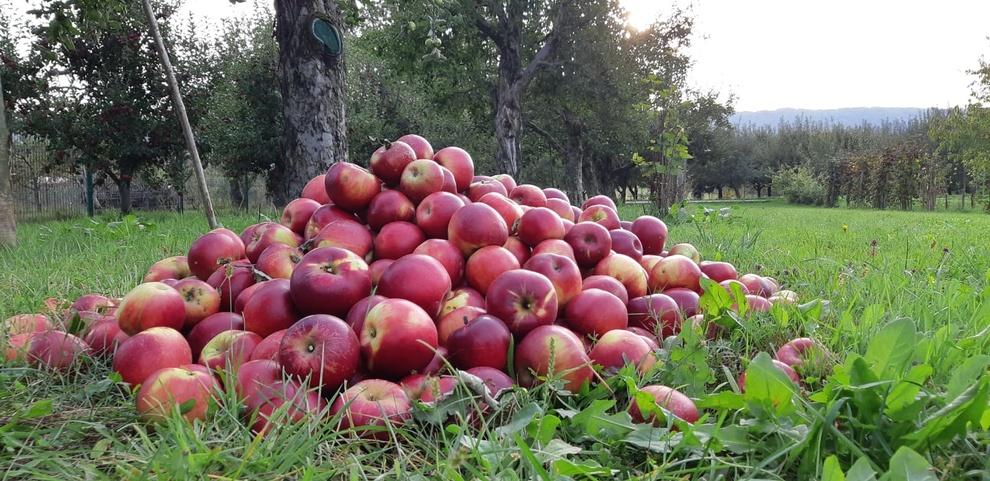 Noutățile săptămânii: mere de Voinești