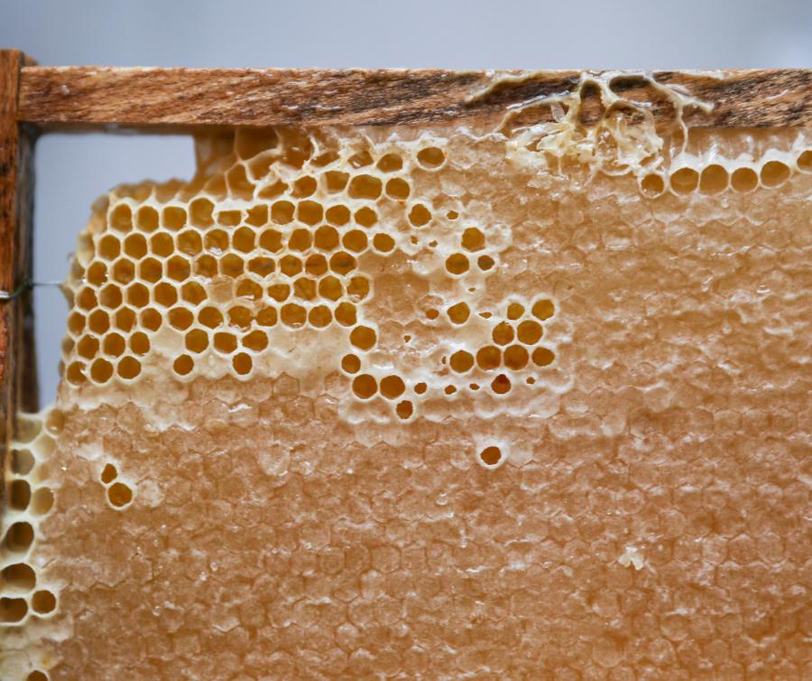 Căpăceala – un adevărat medicament, realizat de albine în farmacia stupului